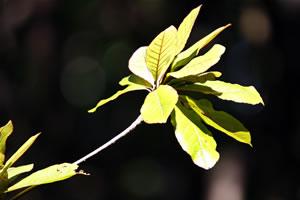 Image nature 1